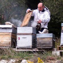 Histoires d'abeilles et de miels rares