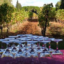 Découverte du vignoble des Moines de St Honorat, au large de Cannes
