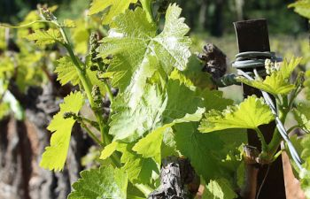 Découverte des vignobles d'Aix en Provence avec un guide passionné d'oenologie