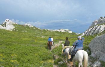 Balade détente à cheval au cœur des Alpilles