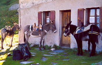 Randonnée à dos d'ânes bâtés dans les montagnes savoyardes