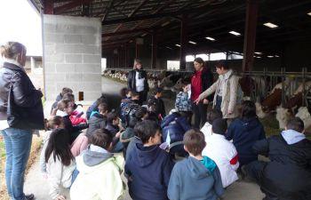 Visite ludique d'une ferme laitière biologique dans la Loire