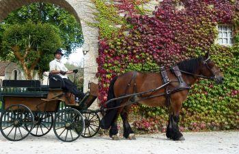 Balade en calèche et dégustation de vin en Côte d'Or