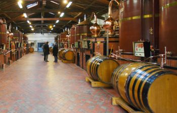 Journée excursion au pays du Cognac : vignobles & distilleries