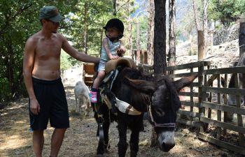 Randonnée avec les ânes autour de la ferme