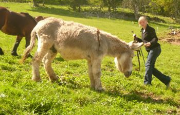 Balade avec des ânes dans les Alpes du Leman