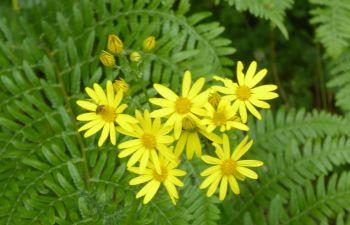 Balade dans la forêt de Bonaguil à la découverte des plantes