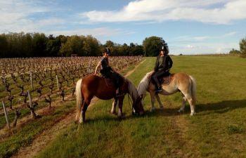 Balade équestre dans le Haut Médoc, entre vigne et forêt
