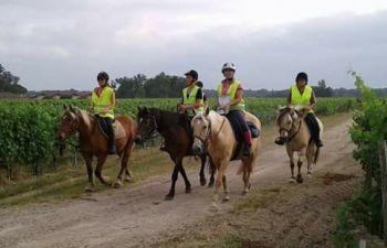 Balade à cheval à travers les vignes, et dégustation de vins dans le Médoc