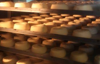 Navettes, croquants : visite d'une biscuiterie provençale