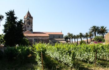 Découverte du vignoble des Moines près de Cannes