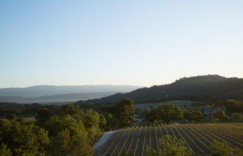 Balade au Château La Coste : vins de Provence et art !