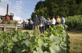 Visite de la cave d'un vignoble et dégustation de champagne