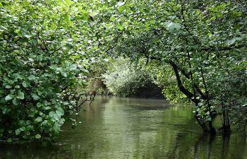 Balade en galupe dans la réserve naturelle du courant d'Huchet