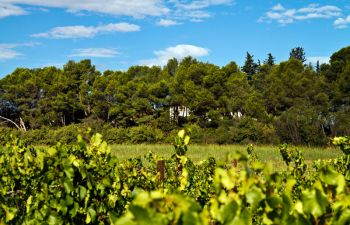 Dégustation de vins conviviale et gourmande !