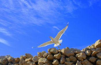 Rando ornithologique au Frioul : à la découverte des îles