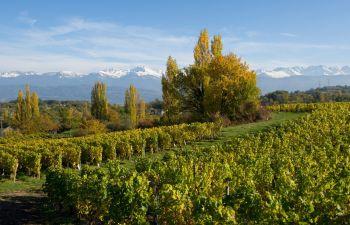 Découverte des vignobles de Savoie près de Chambéry