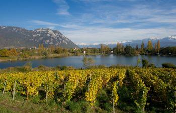 Randonnée œnologique au cœur d'un vignoble savoyard