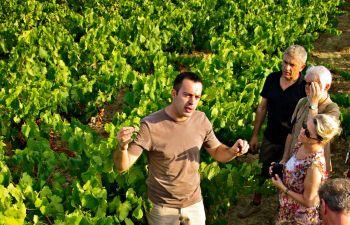 Visite pédagogique et dégustation de vins Pic Saint Loup