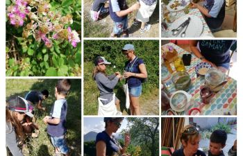 Cueillette et cuisine de plantes comestibles en Isère