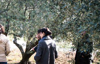 Formation à la dégustation d'huile d'olive