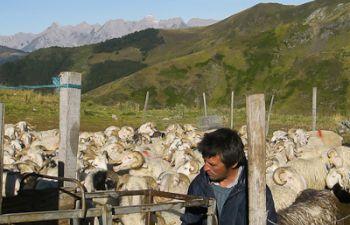Randonnée à la rencontre d'un berger dans la Vallée d'Aspe