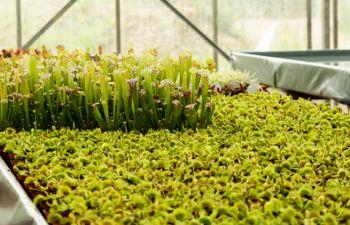 Visite d'une production de plantes carnivores près de Caen