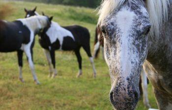 Randonnée équestre : une journée au cœur de la Gironde