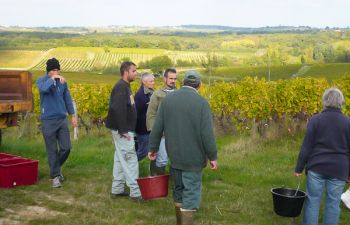 Découverte intime d'un domaine viticole familial et dégustation