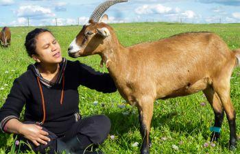Visite d'une chèvrerie en Haute-Marne