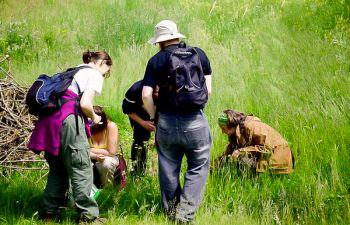 Plantes sauvages comestibles du Jura : balade avec une botaniste