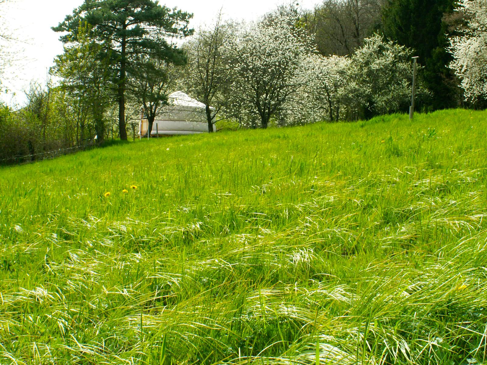 A la d couverte du safran en lorraine du jardin l for Du jardin a l assiette mauves