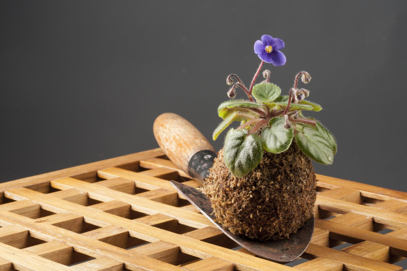 Atelier d art floral japonais au c ur de paris activit paris france - Atelier d art de france ...